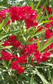 Information About Mediterranean Gardening Plant Notes